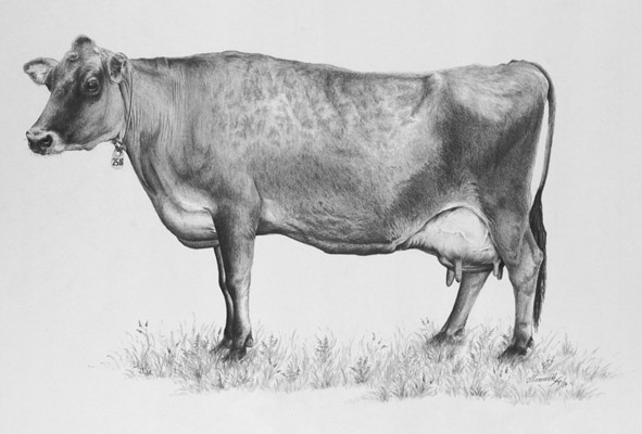 Jersey Cow, available as a Print
